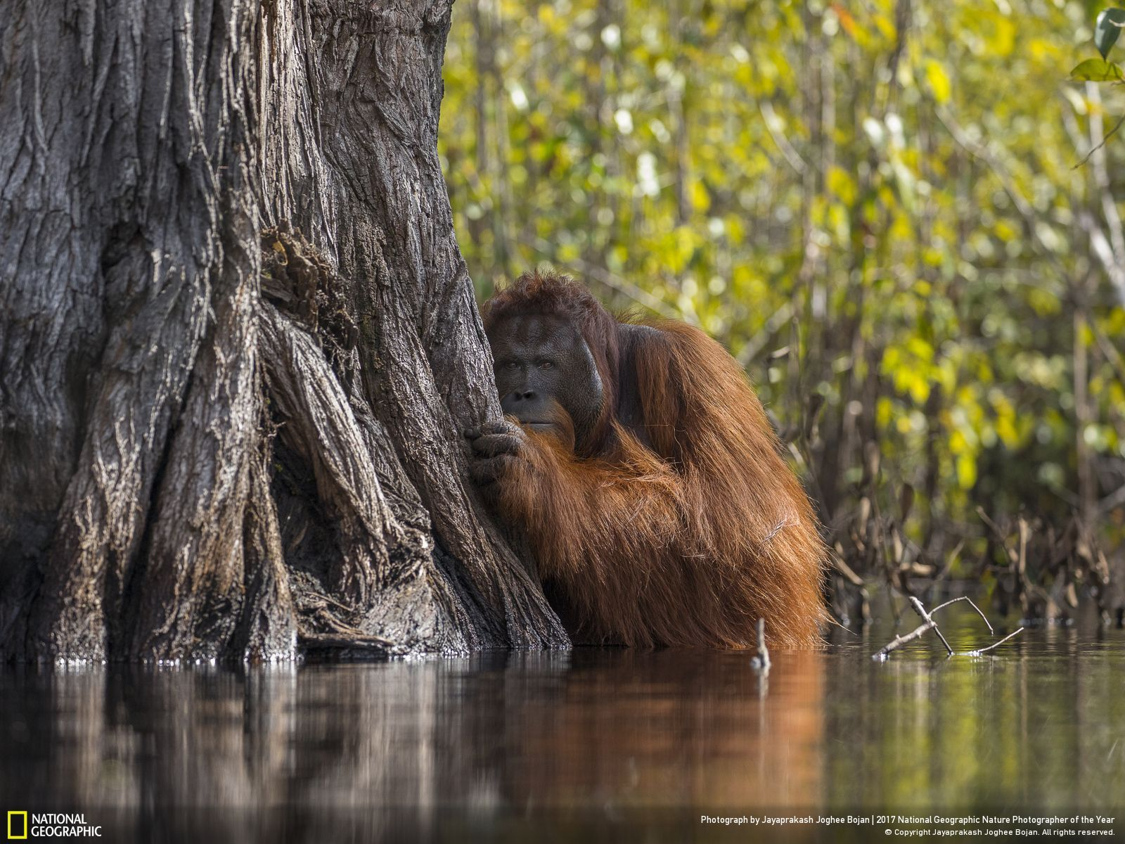 National Geographic GRAND PRIZE wildlife 2017