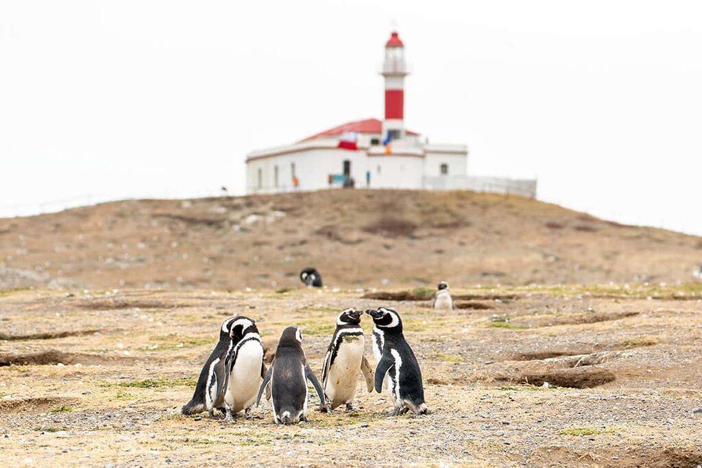 Isla Magdalena Patagonie: na výlet za tučňáky!