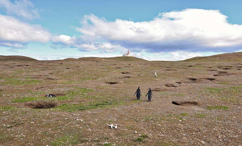 Maják na Isla Magdalena a tučňáci