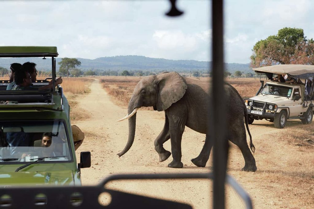 Sloni jsou někdy velmi blízko aut
